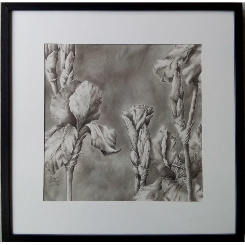 156 Patrick Pawliczek - Iris