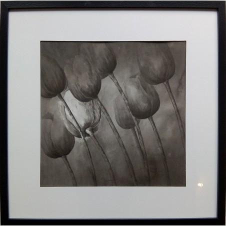 160 Patrick Pawliczek - Tulipes